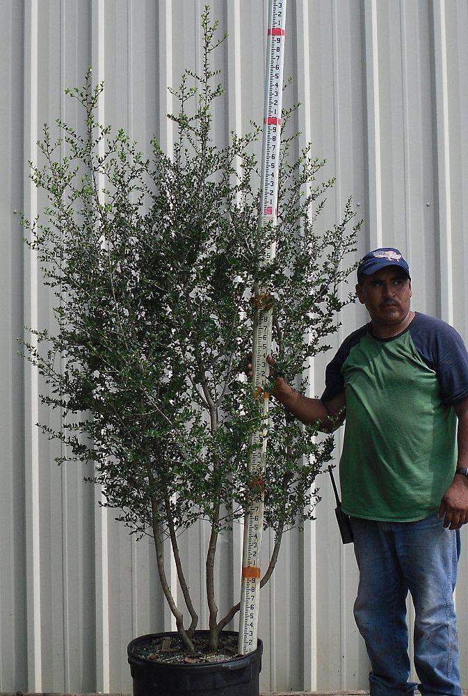 Greenforest Nursery Inc Plantant Com