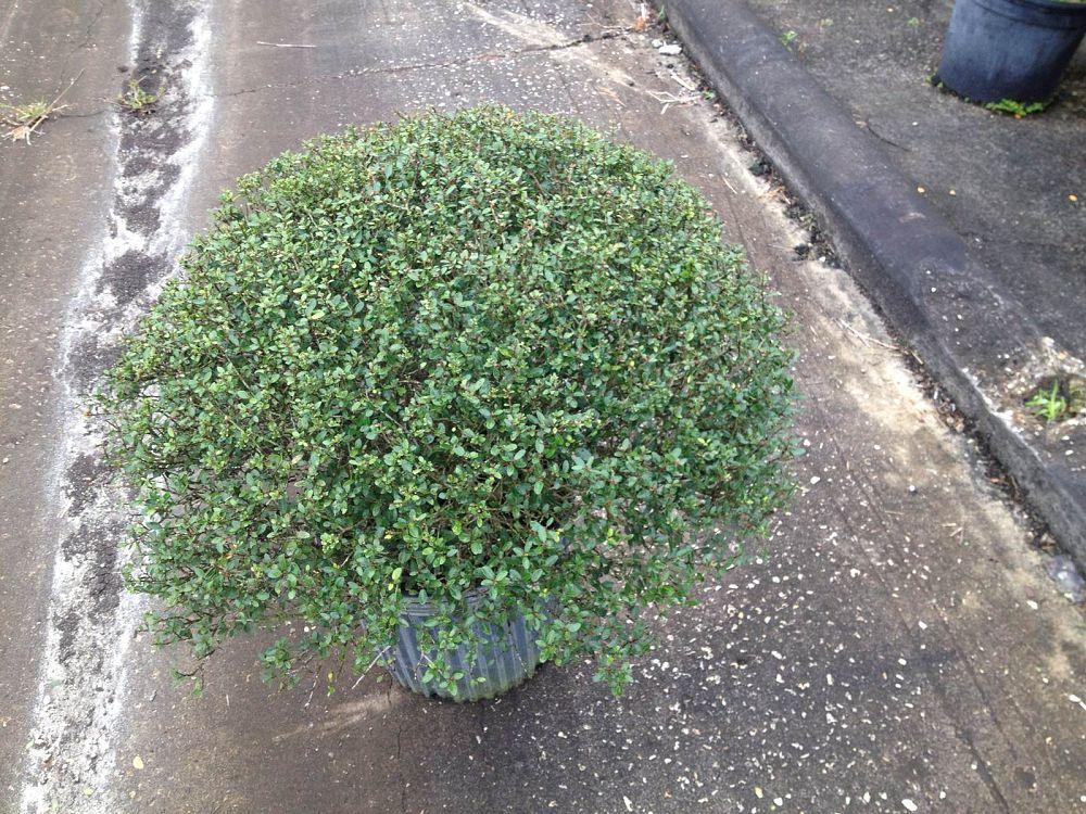 Plant Craft Plantant Com