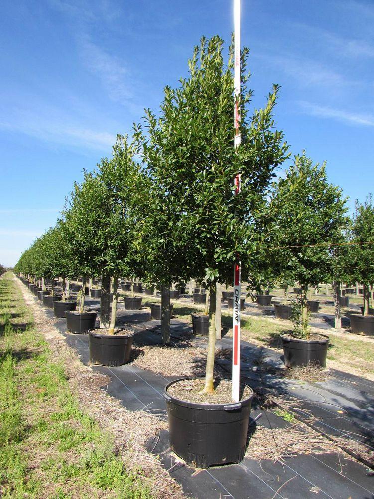 Marian Gardens Tree Farm Plantant Com