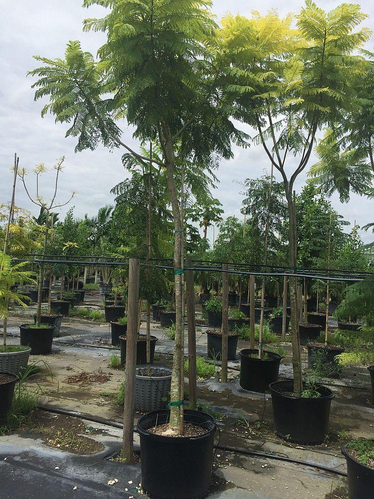 A Amp C Nursery Plantant Com