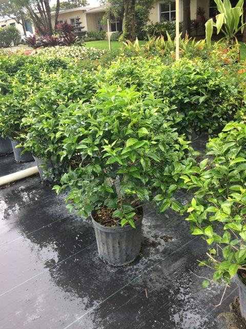 Weston Nursery Plantant Com