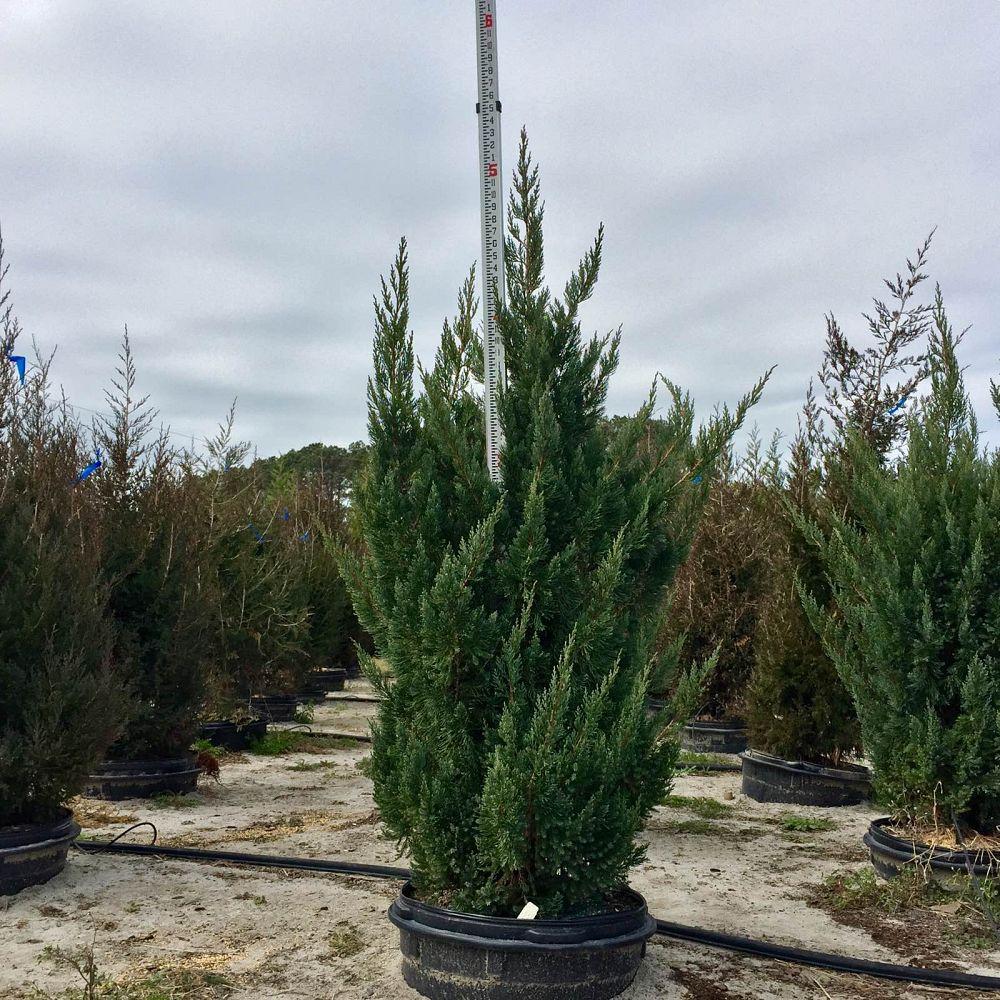 Tankard Nurseries Plantant Com