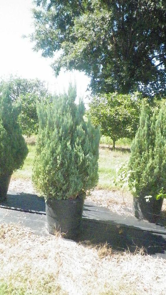 Matlack Tree Farm   plantANT com
