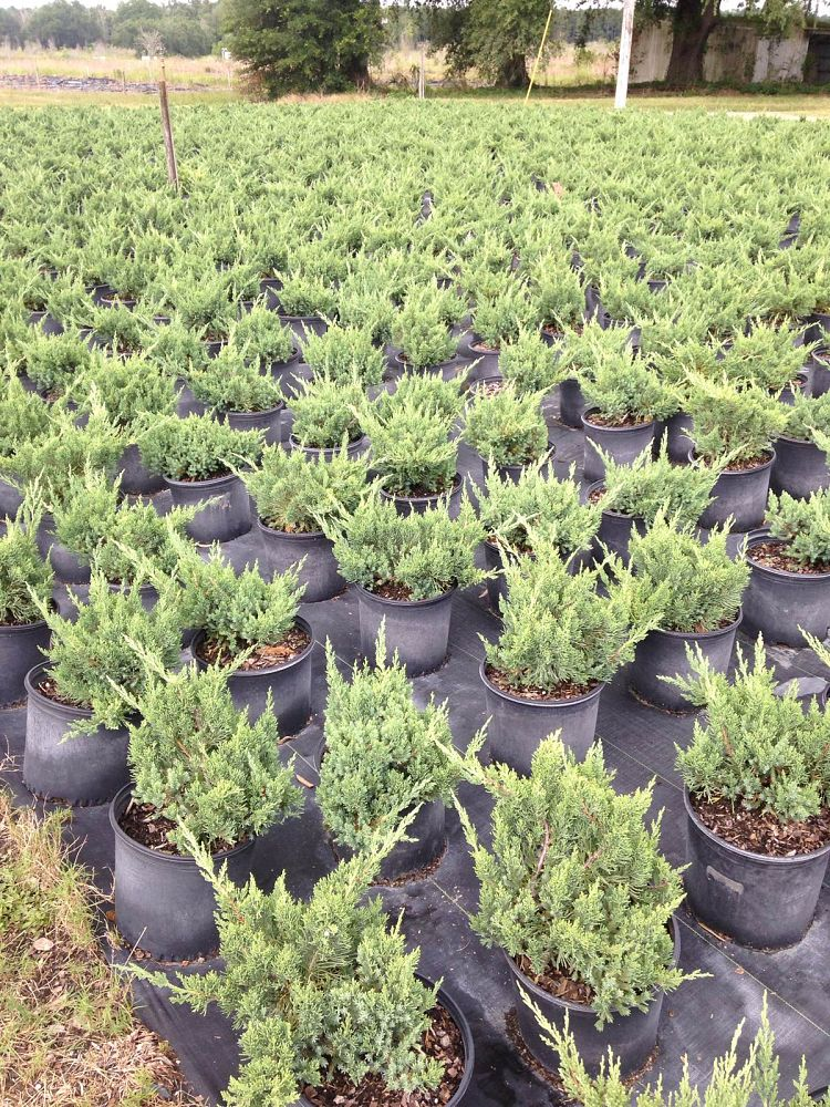 Locate find wholesale plants for China garden dover nj