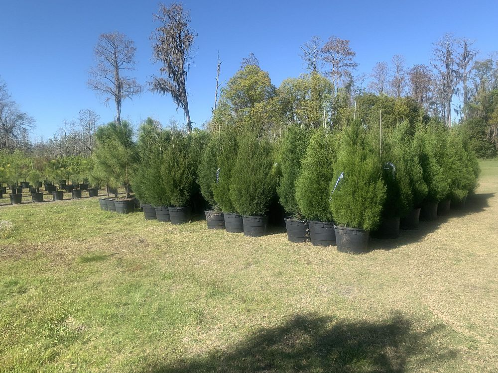 Centurylink Net Login >> Lake Kirkland Nursery & Tree Farm | plantANT.com