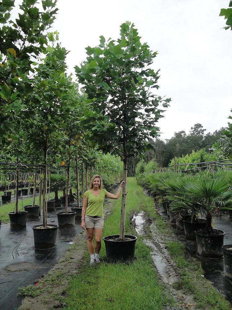 Locate find wholesale plants for Landscaping rocks tallahassee fl