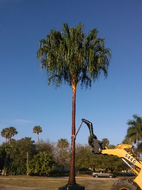 Tree Farm Vero Beach Fl