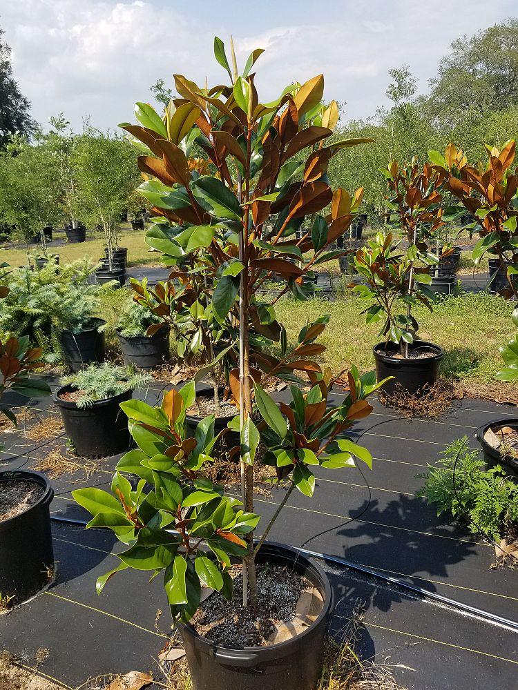 Pinelands Nursery Co Plantant Com