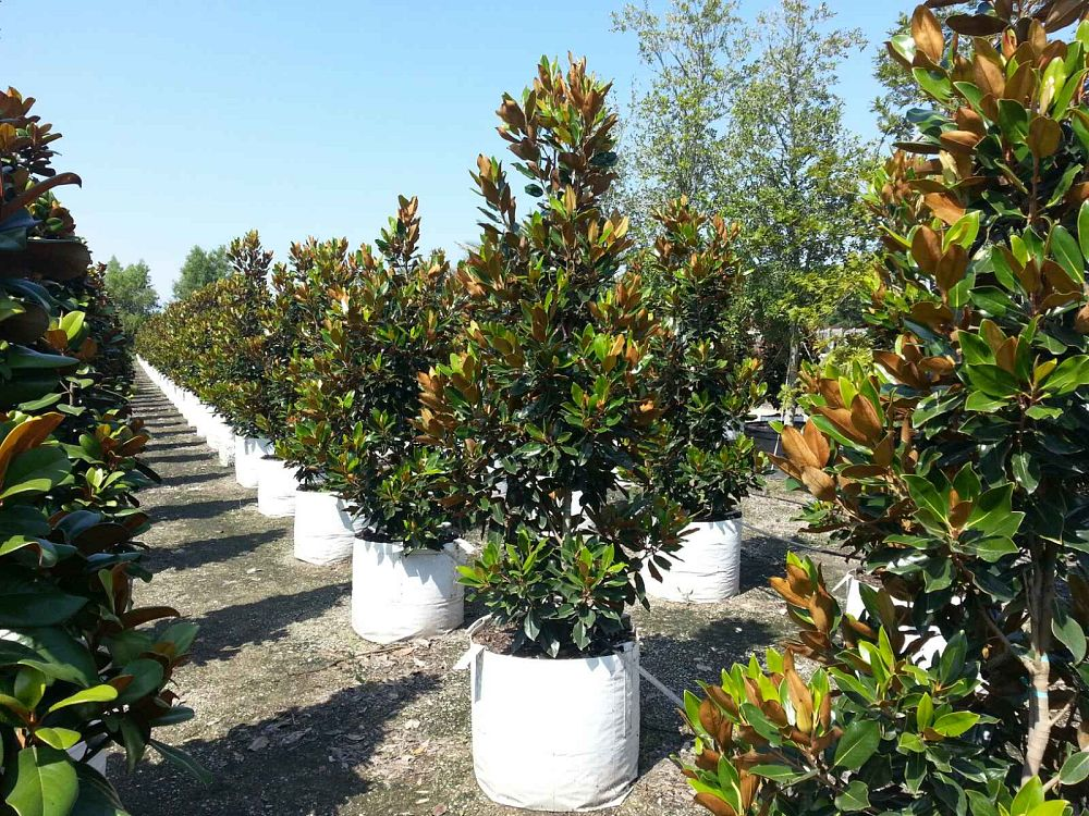 Locate find wholesale plants plantant sciox Gallery