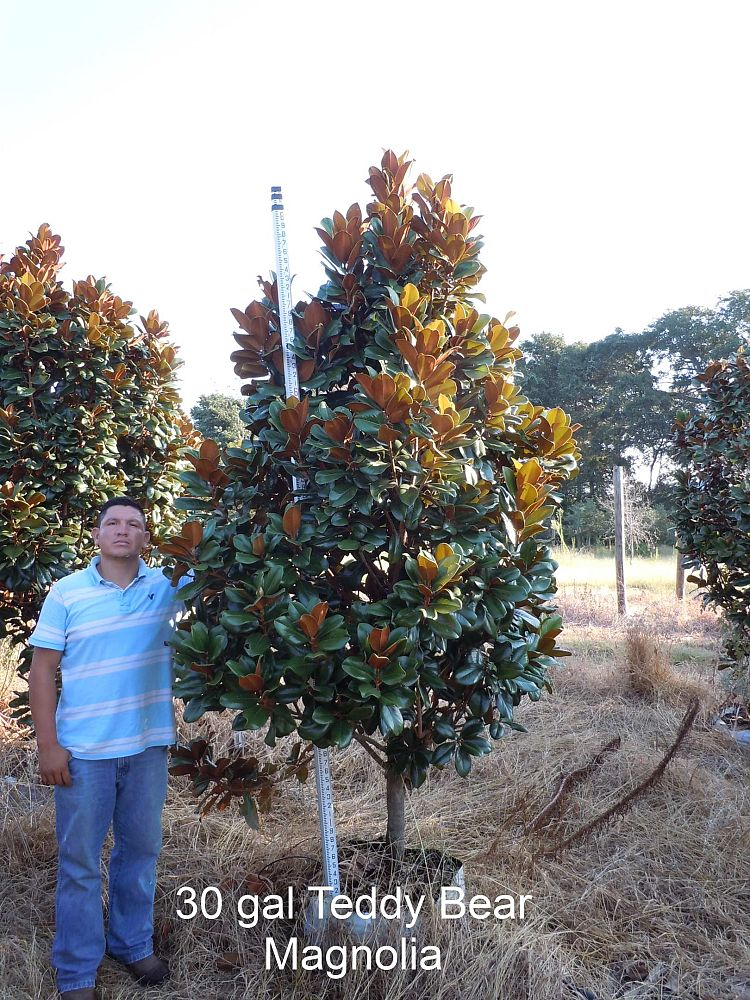 Mc Landscape Trees Plantant Com