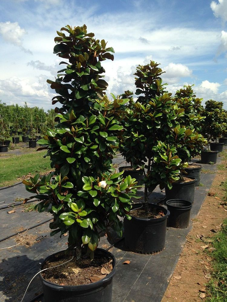 Quality Tree Farmsllc Plantantcom