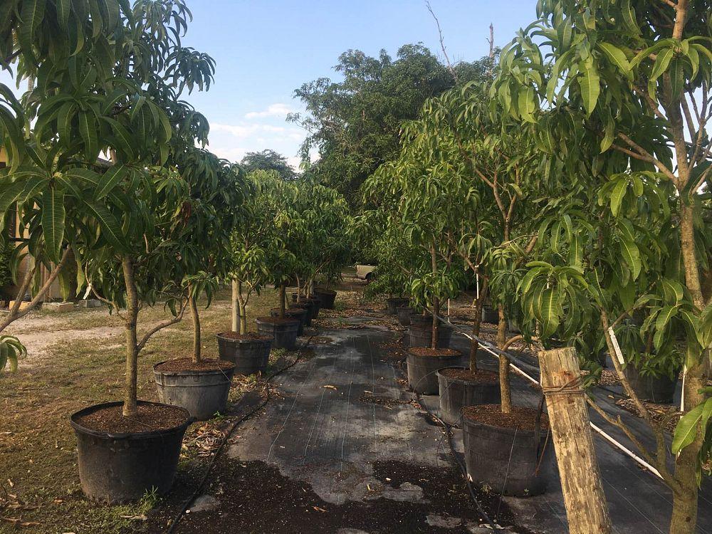 Green Land Tropical Nursery Plantant Com