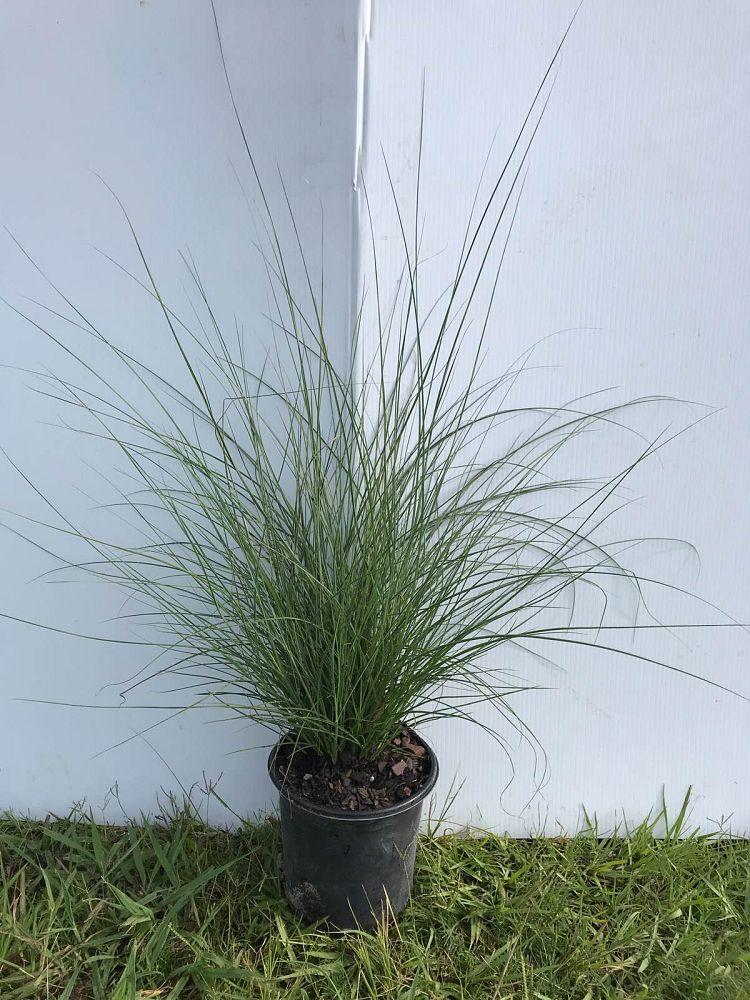Shade Tree Nursery Llc Plantant Com