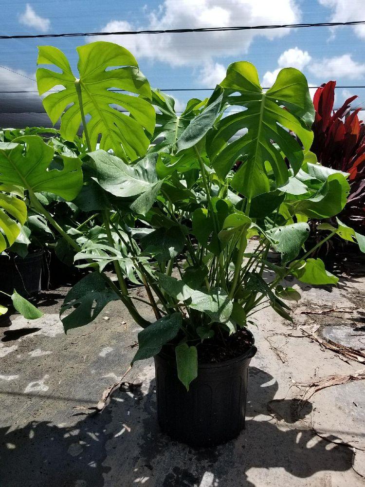 Quetzal Nursery Plantant Com
