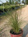 Plant Ceaux Plantant Com