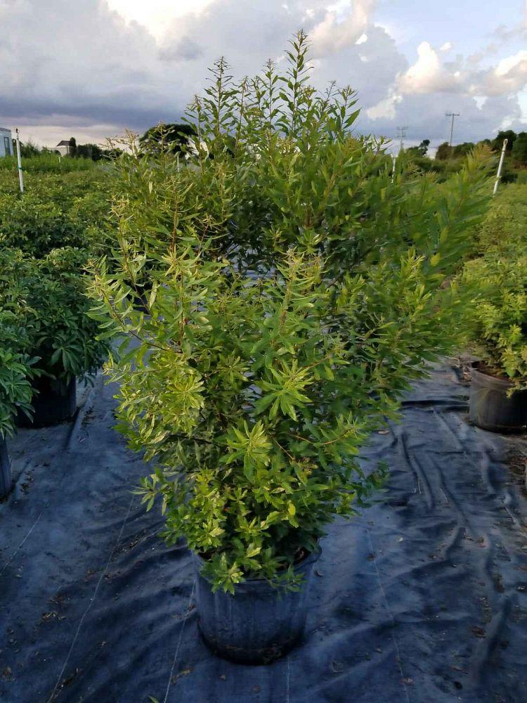 Ximena Nursery Plantant Com