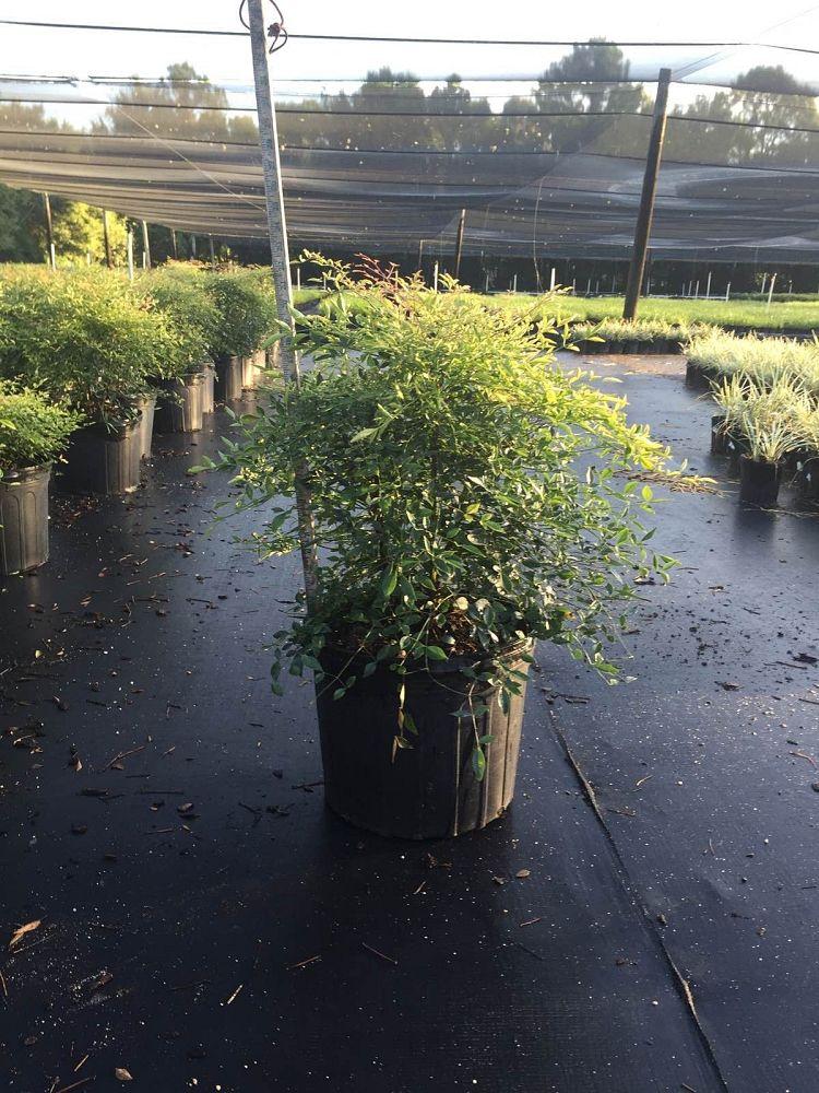 Jons Nursery Inc Plantant Com