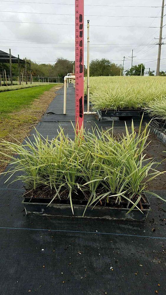 Green Tropical Nursery Plantantcom