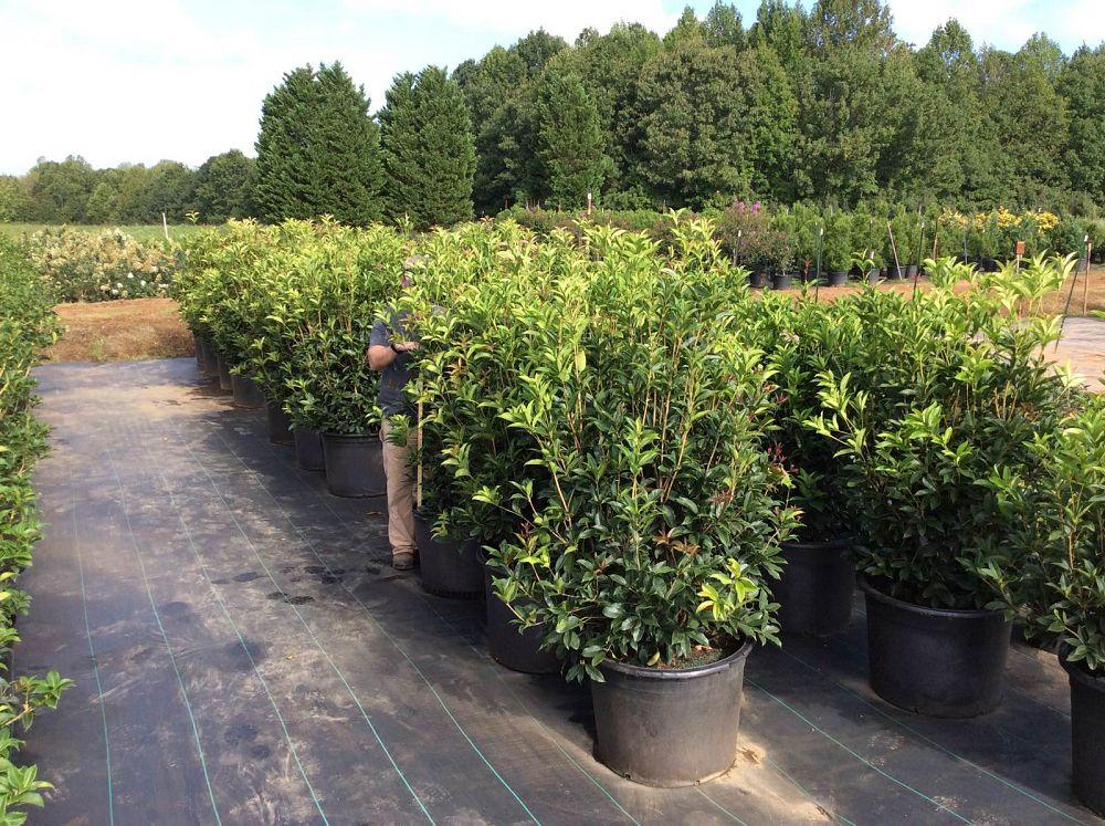 Locate Find Wholesale Plants