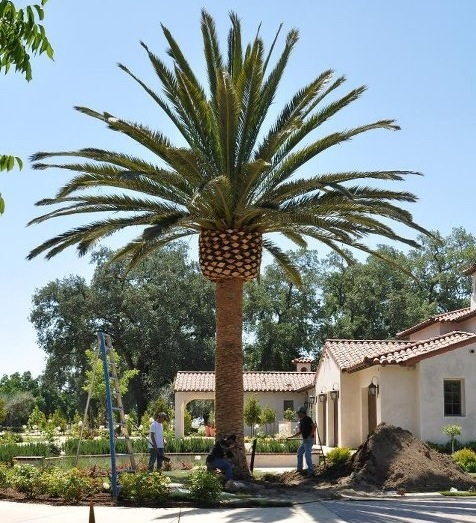Golden State Tree Company Plantant Com