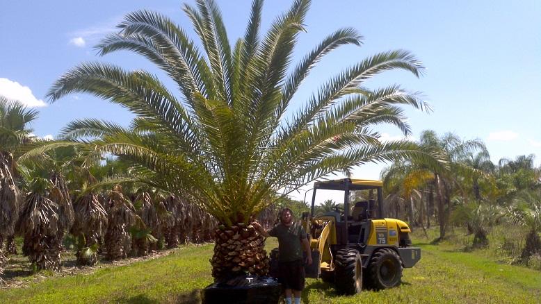 Oviedo Tree Farm Plantant Com