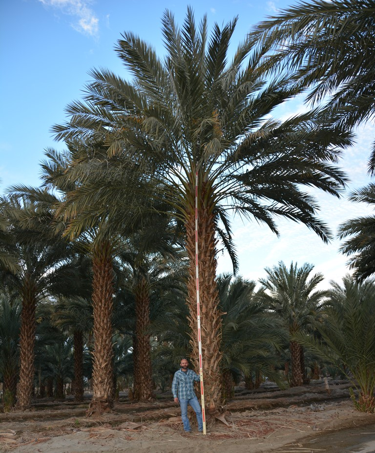 Palm coast dating