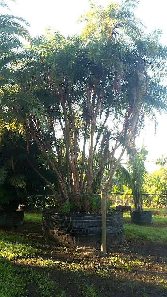 Specimens Galore Inc Plantant Com