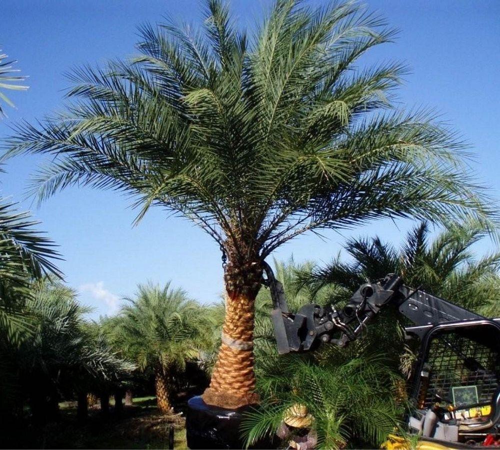 Randy Frazier Palms Plantant Com
