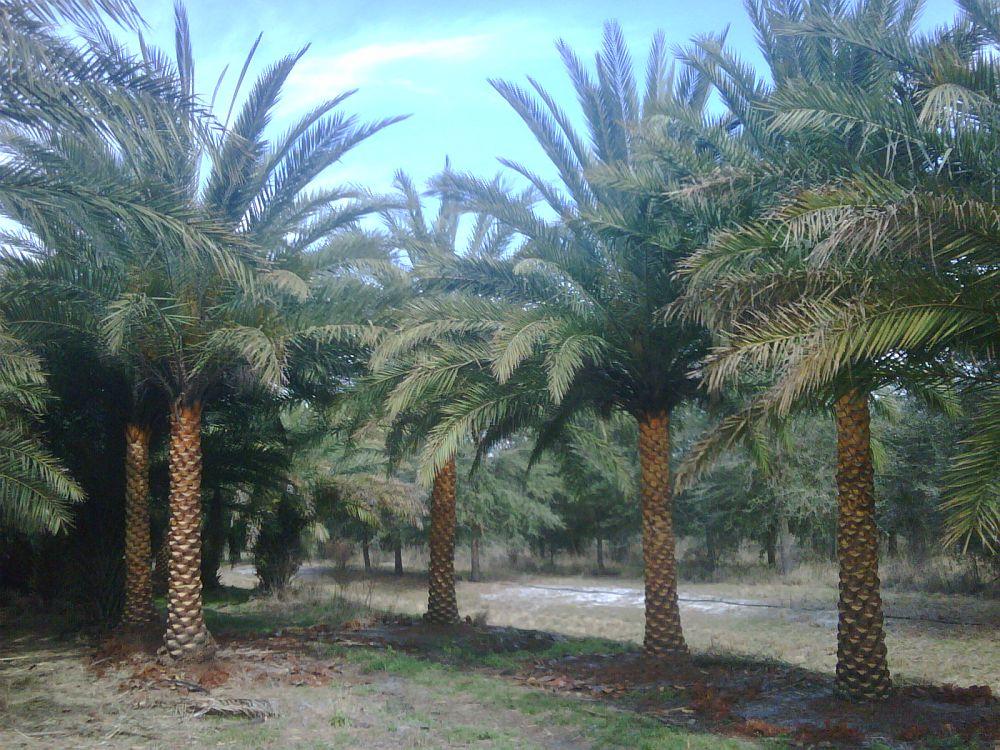 Sebastian Palms Llc Plantant Com