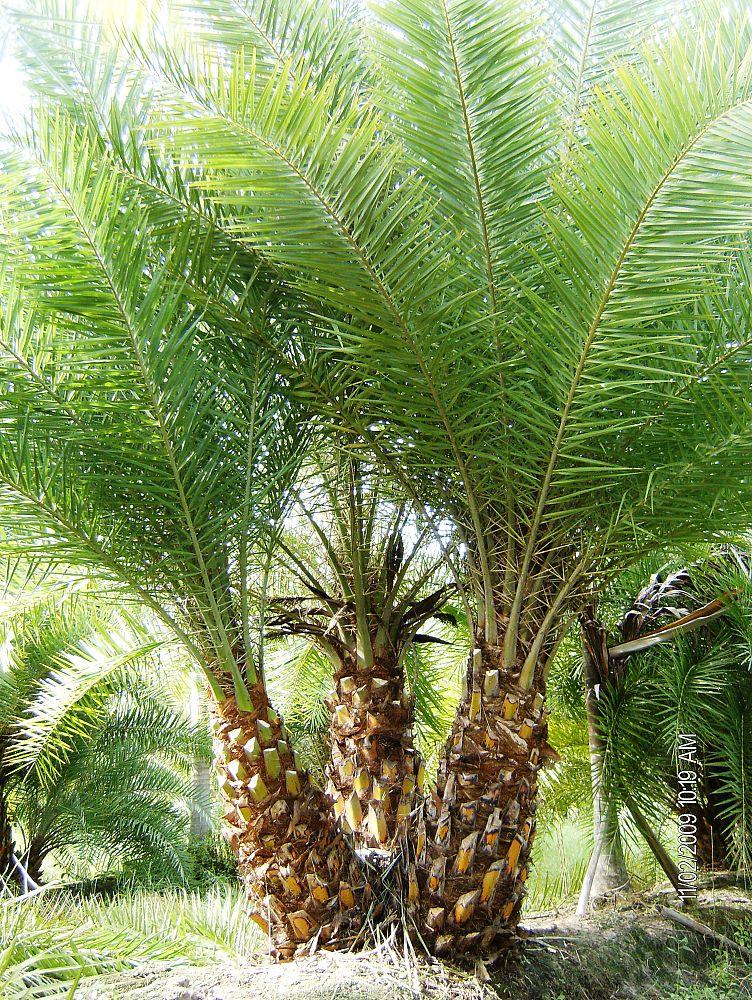 Native Tree Nursery Inc Plantant Com