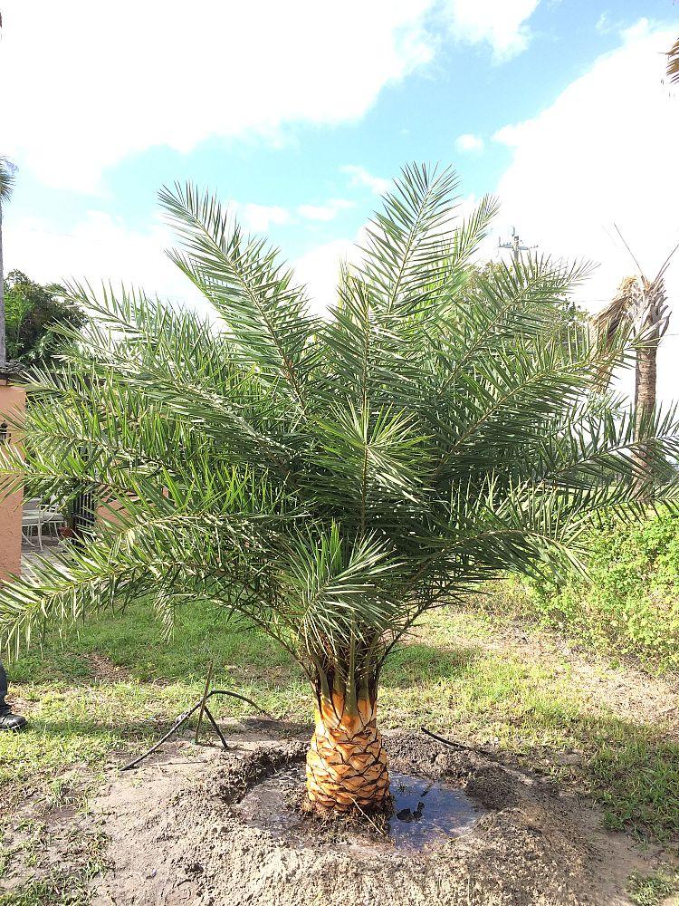 Universal Tree Farm Llc Plantant Com