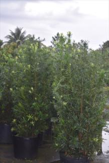 Reed S Weeds Amp Flower Farm Plantant Com