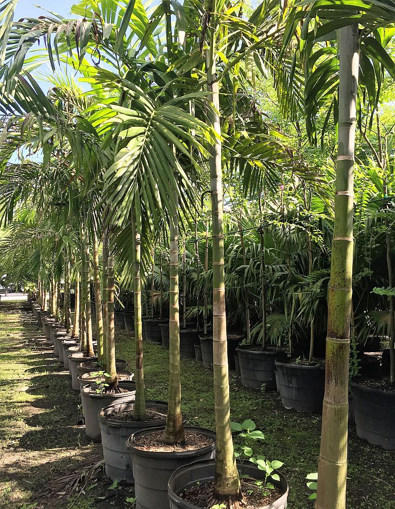 Distreebutors Farm Inc Plantant Com