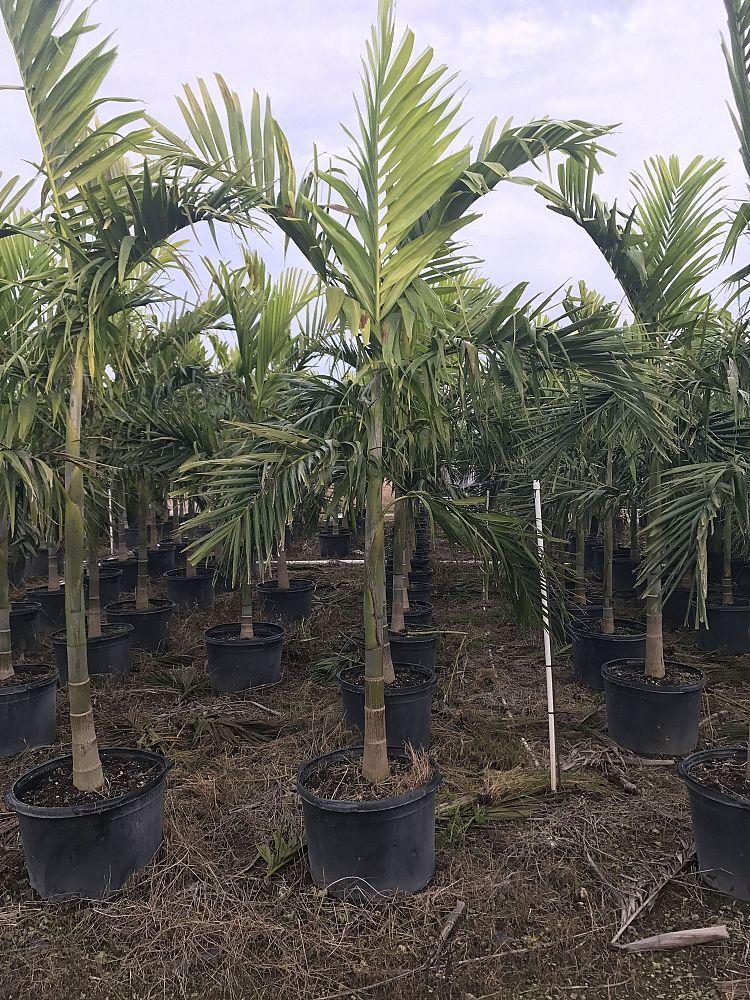 Plant Depot Llc Plantant Com