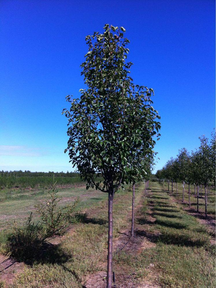 Whitetail Tree Farm | plantANT.com