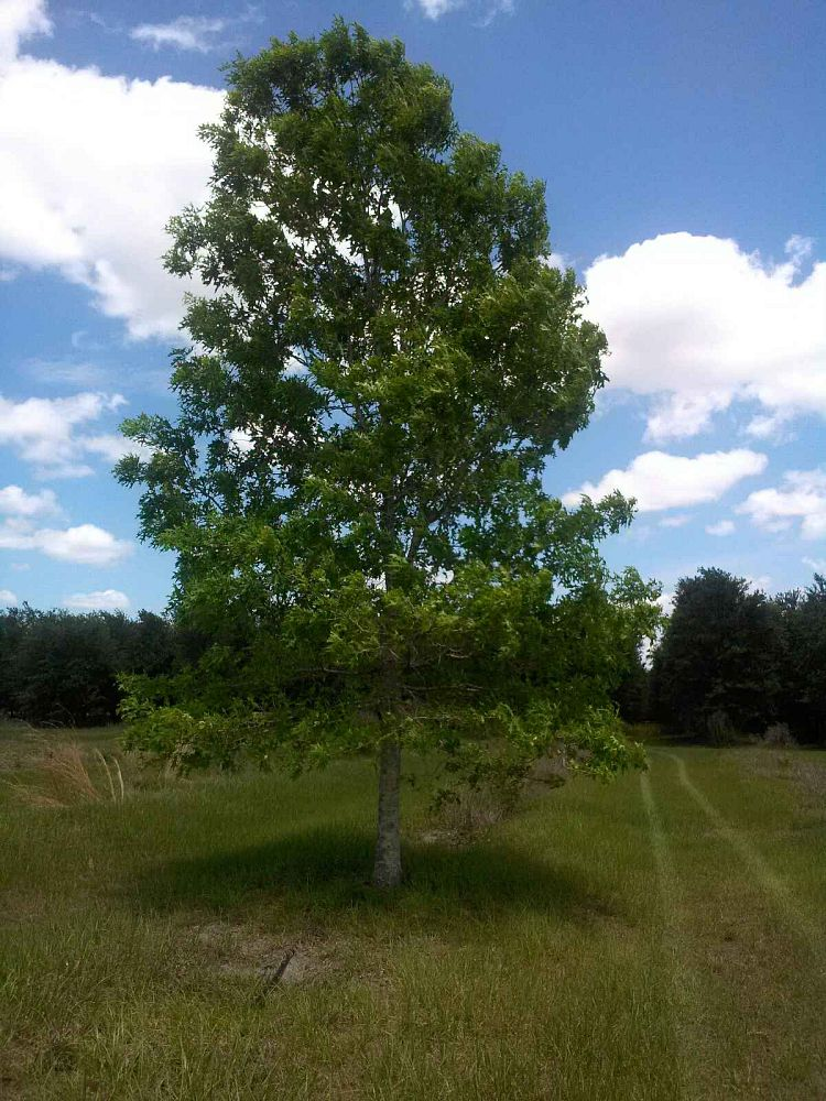 Ellenton Nursery Growers Plantant Com