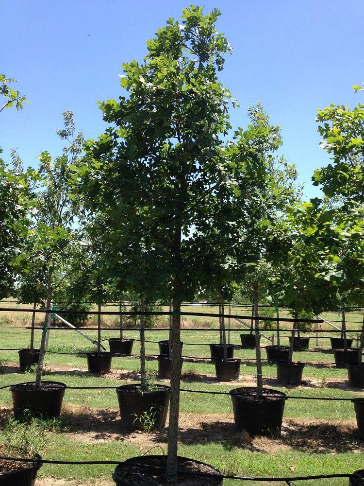 Flory Tree Farm Plantant Com