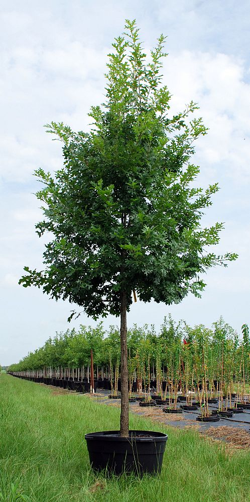 Top Notch Tree Farm Llc Plantant Com