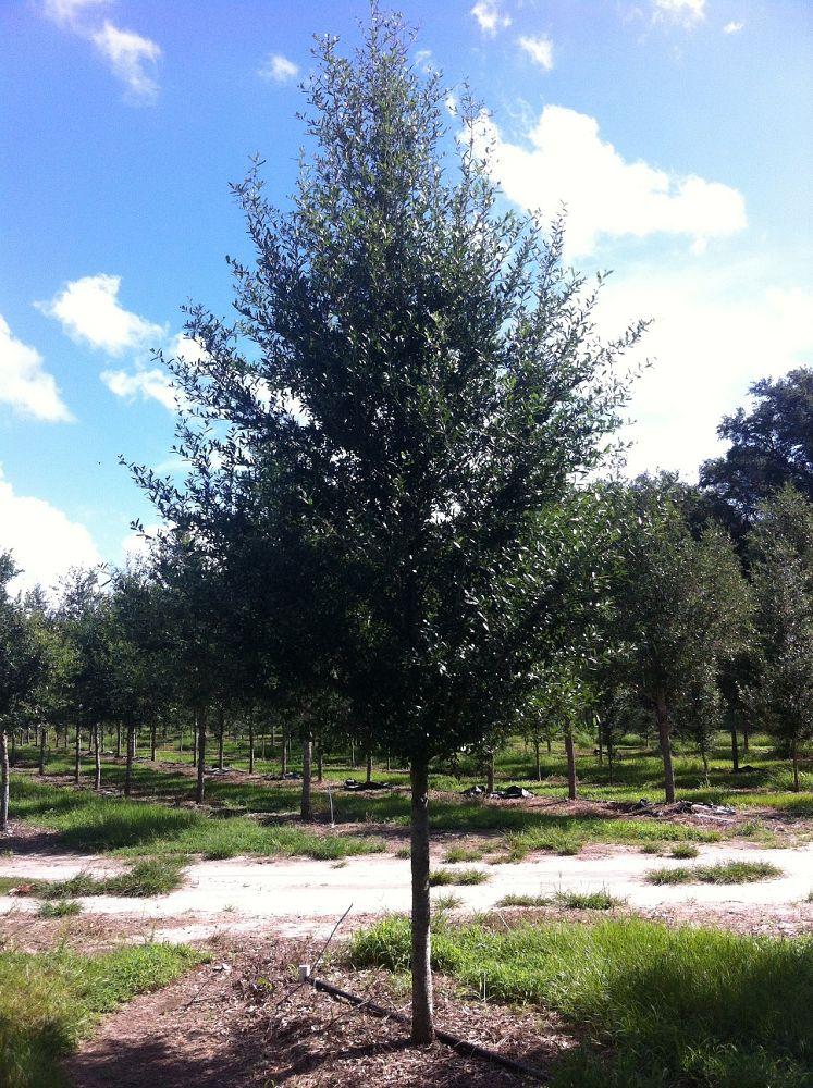 Southeastern Trees Plantant Com