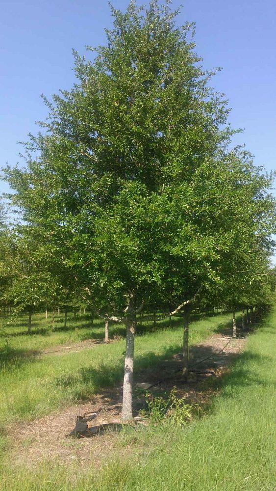 Tree Trends Inc Plantant Com