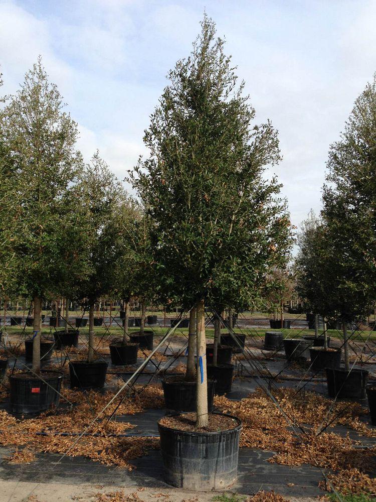 Bradshaw S Nursery Inc Plantant Com
