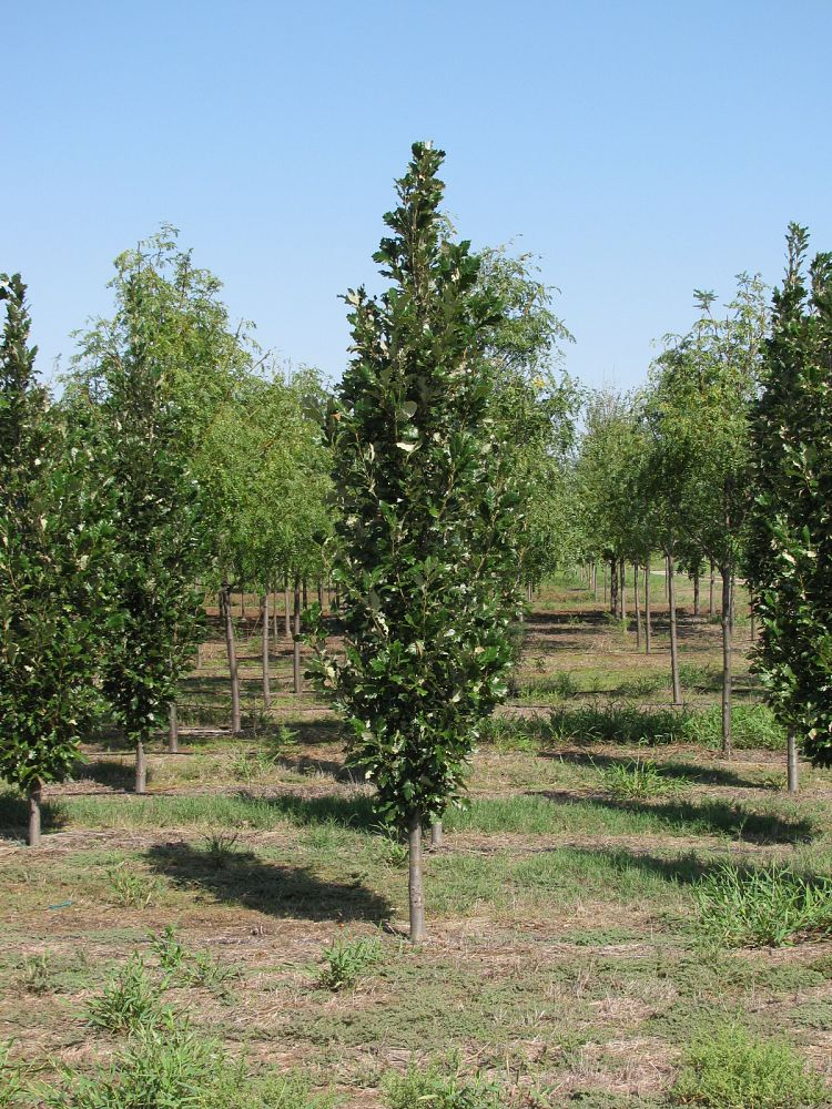 Whitetail Tree Farm | plantANT.com