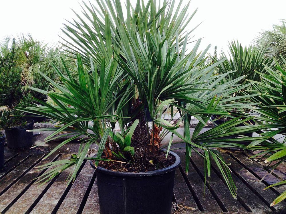 plant craft plantantcom