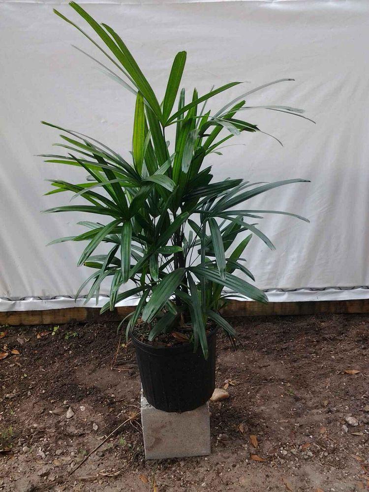 Mb Palms Plantant Com
