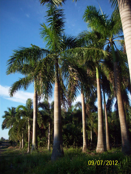 Best cuban dating site florida