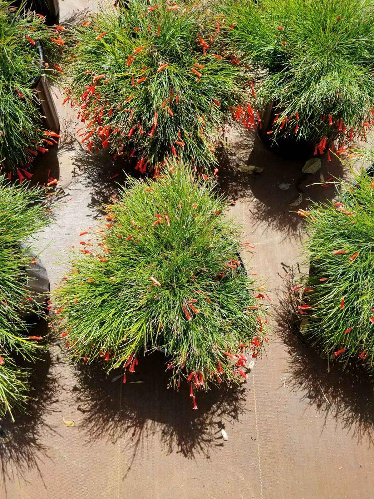 Just Perfect Plants Plantant Com