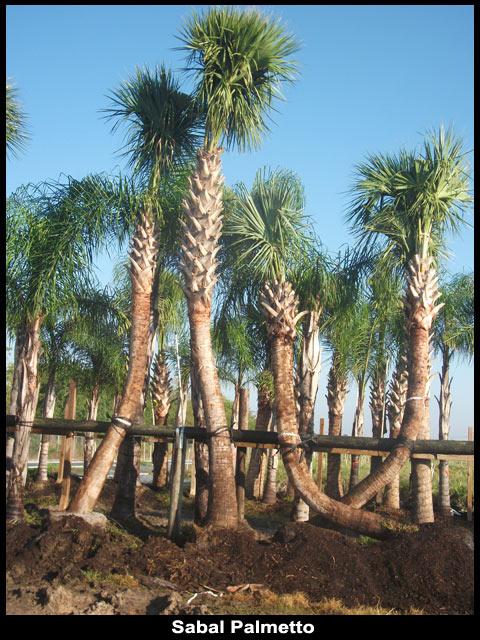 Groundworks Texas Plantant Com