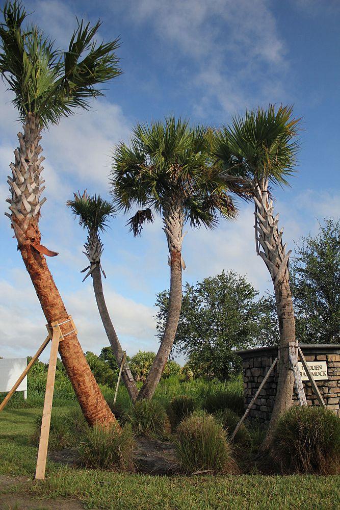 Tree Planters Of South Florida Inc Plantant Com