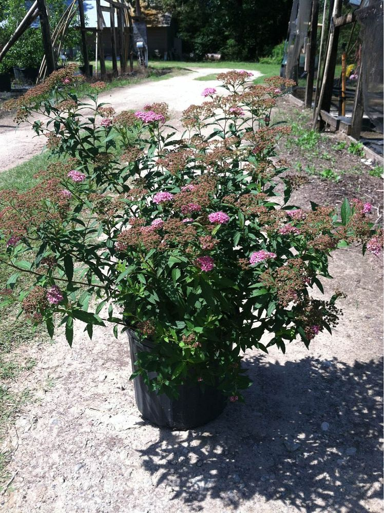 Blalock Wholesale Nursery Plantant Com
