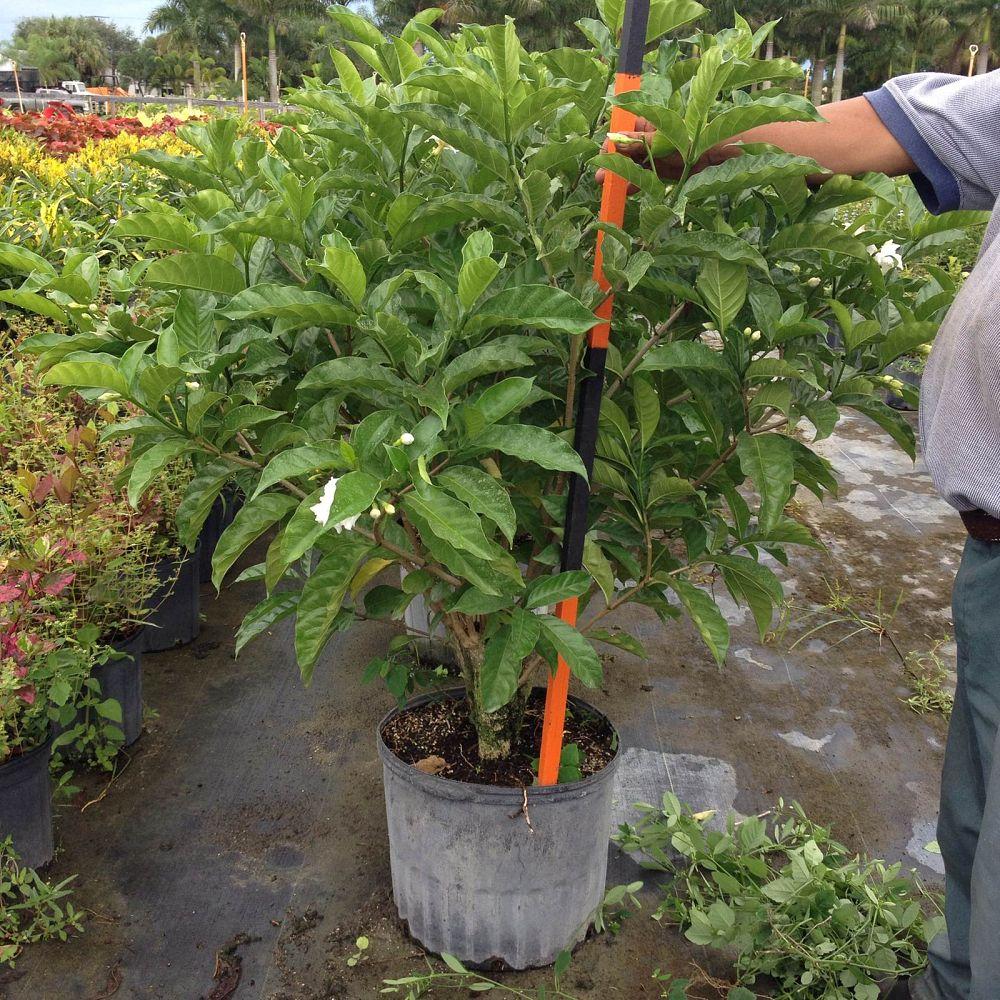 Big Orange Nursery Inc Plantant